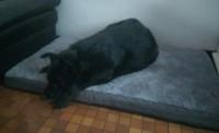 Matelas-memoire-de-forme-pour-chien-Zolia-Nixon---3-tailles-disponibles_de_Virginie_18818378625d726fff568d93.53855174