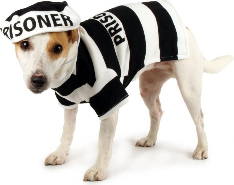 Déguisement prisonnier Zolia Festive pour chien