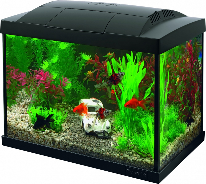 Superfish START Kit 20 Goldfish Noir ou Blanc