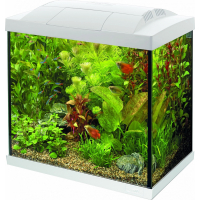 Superfish START Kit 50 Tropical Noir ou Blanc