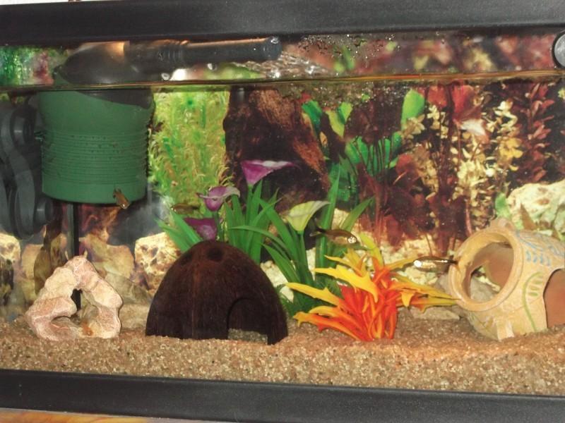 Avis Sur Cruche Pour Aquarium Egypte