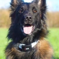 Collier pour chien Premium I Dog 65cm