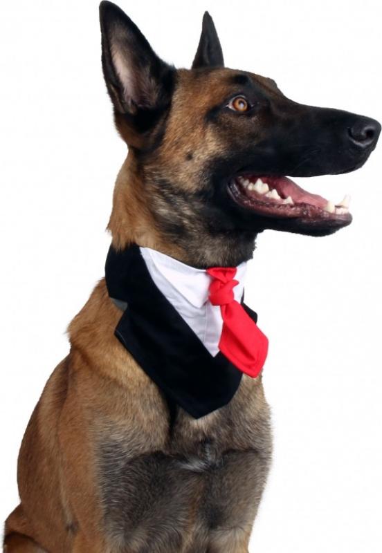 Corbata para perro Zolia Festive