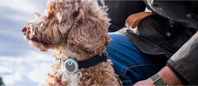 Capteur Animo : traqueur d'activités et de comportement pour chien