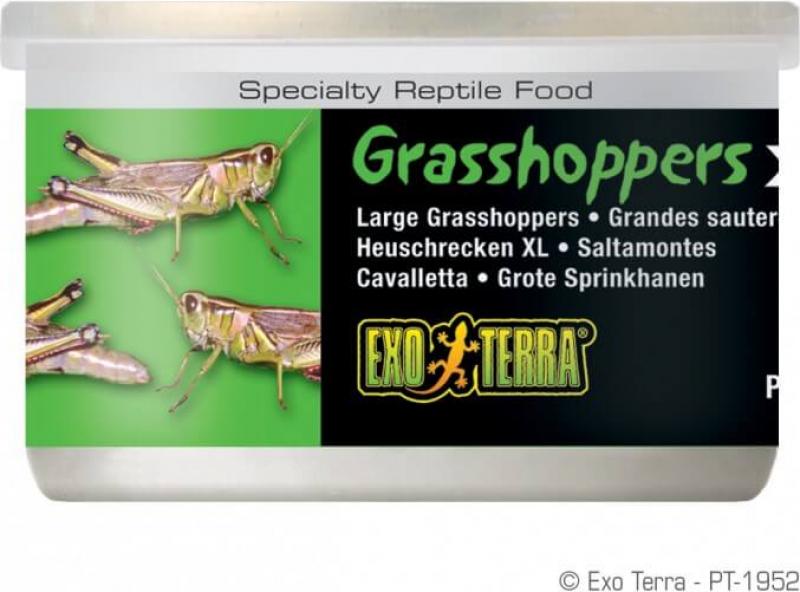 Sauterelles sauvages XL Exo Terra