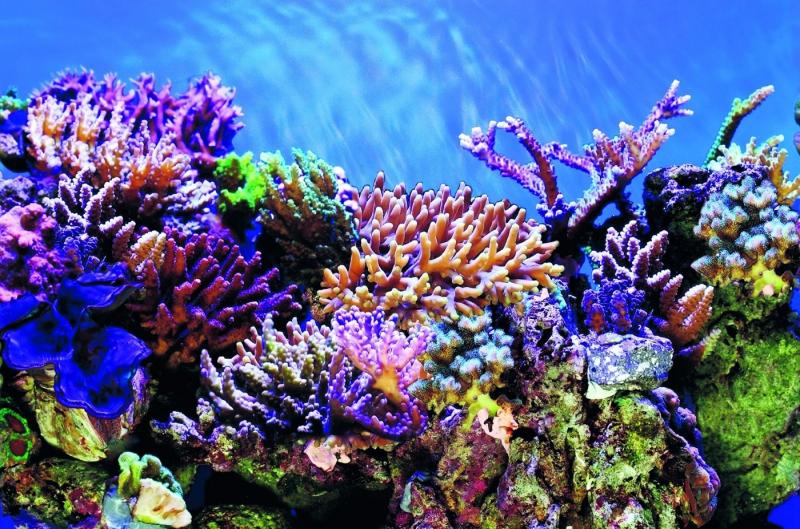 SuperFish Deco Poster A - 6 tailles Poster de fond pour aquarium