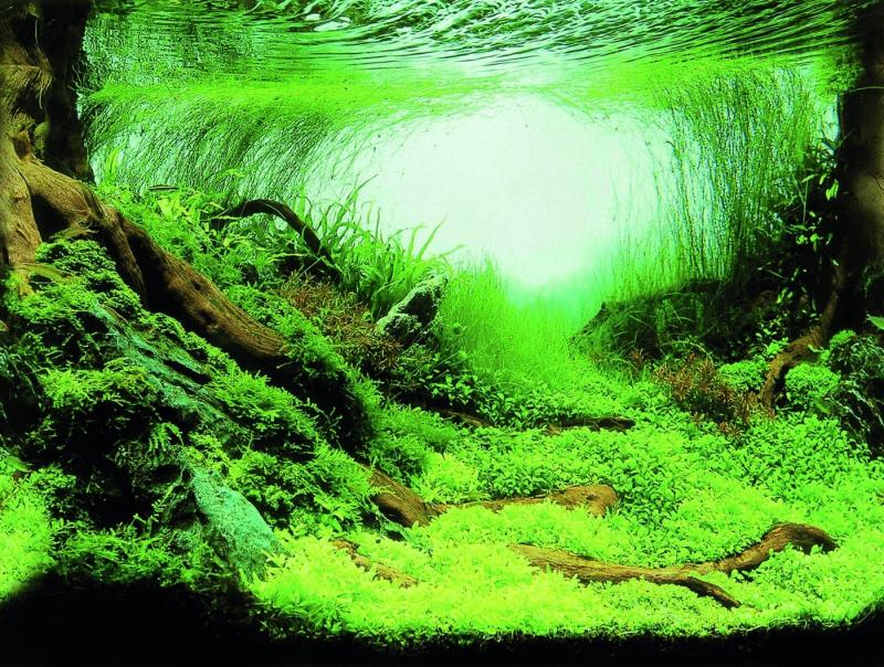 SuperFish Deco Poster C - 6 tailles Poster de fond pour aquarium