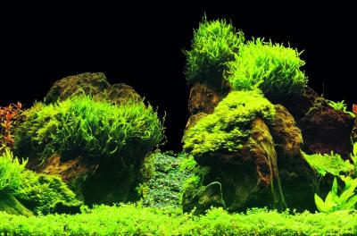 SuperFish Deco Poster E - 6 tailles Poster de fond pour aquarium