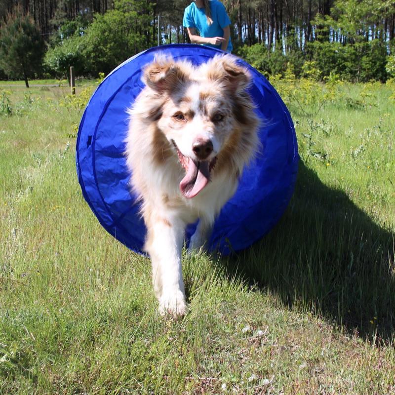 Tunnel Agility pour chien Zolia - 5 mètres