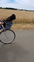 48_Panier-transport-vélo-Atlas-Bike-20-Rapid_de_FRANCOISE_748401385d3f1061ef6050.06157673