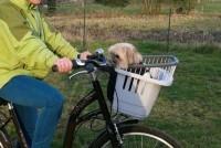 Panier-transport-velo-Atlas-Bike-20-Rapid_de_Angeline_163824851655088fa34f9b32.91449477