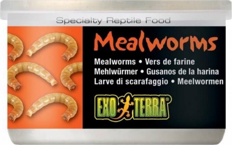 Exo Terra Mealworms vers de farine pour tous types de reptiles