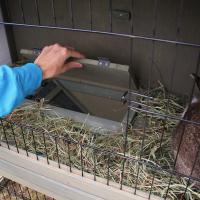 Clapier Zolia Mona pour rongeurs et lapins avec cour sécurisée