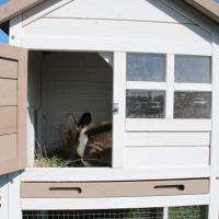 Coelheira com cerca Zolia Texas para roedores e coelhos