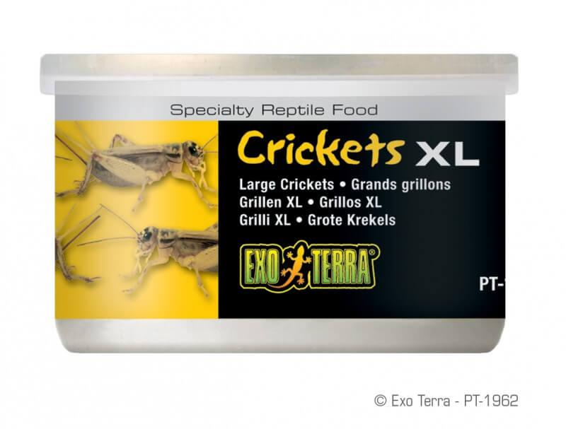Criquets XL Exo Terra 34g_0