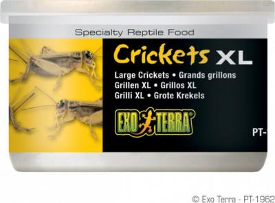 Criquets XL Exo Terra 34g