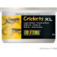 Criquets XL Exo Terra 34 g
