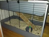 487_Cage-Ferplast-Rabbit-100-Double-pour-lapin-et-cobaye_de_richard_15055593315a54e5463e0548.90380843