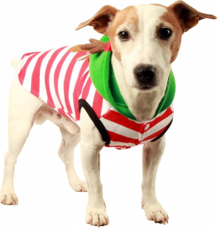 Sweat avec capuches Rennes Zolia Festive pour chien