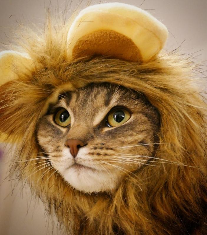 Déguisement pour chat et chien Zolia Le Lion