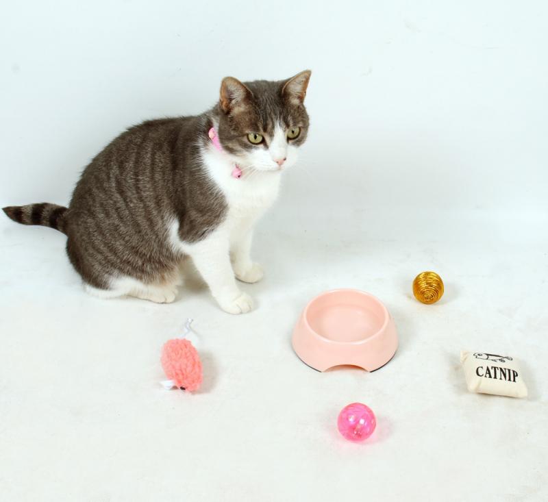 Kit de bienvenue complet pour chaton ou chat Zolia Royal Kitty