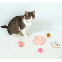 Kit de bienvenue complet pour chaton ou chat Zolia Royal Kitty
