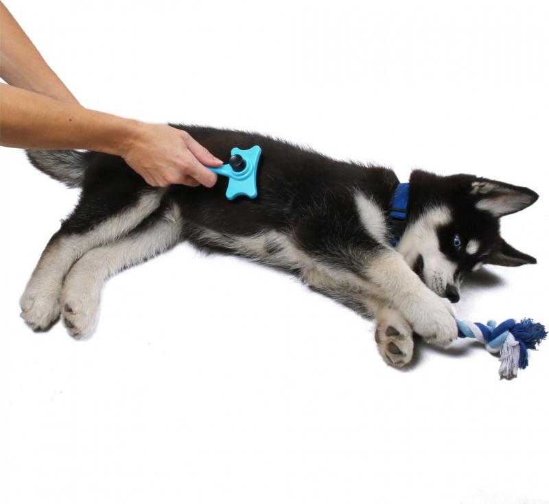Kit de bienvenue complet pour chien Zolia Royal Puppy