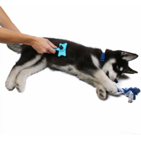 Willkommenskit für Hunde Zolia Royal Puppy