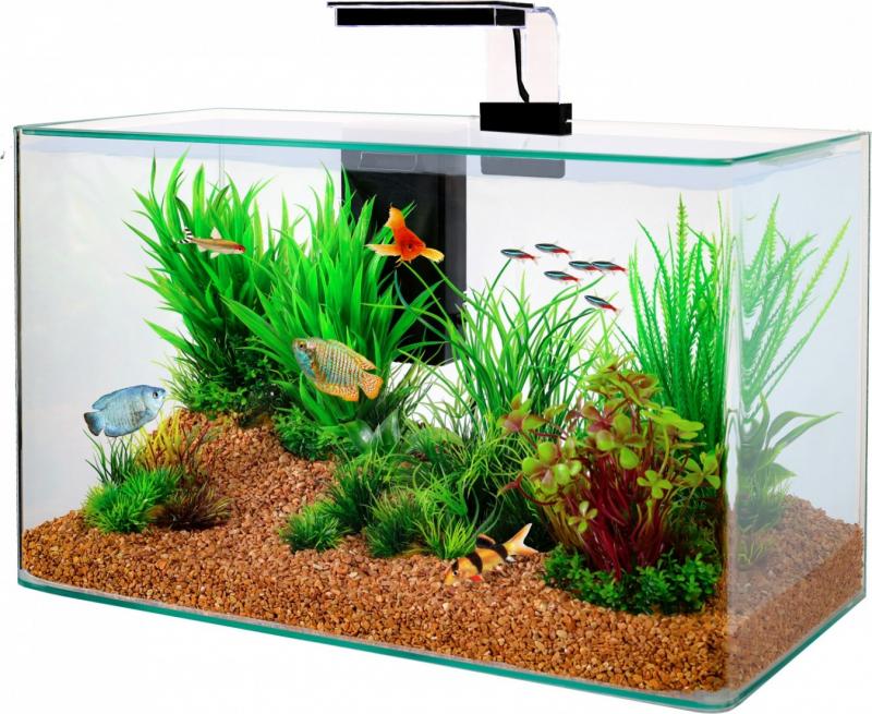 Aquarium Clear met ronde hoeken
