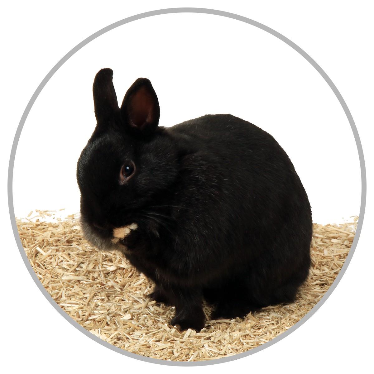 La nouvelle litière préférée de votre lapin