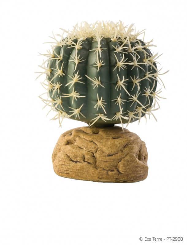 Cactus oursin Exo Terra_1