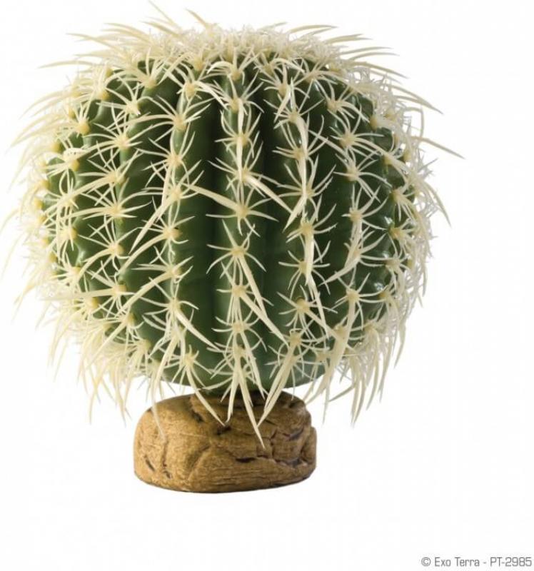 Cactus oursin Exo Terra