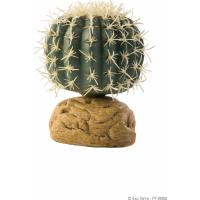 Cactus orso Exo Terra