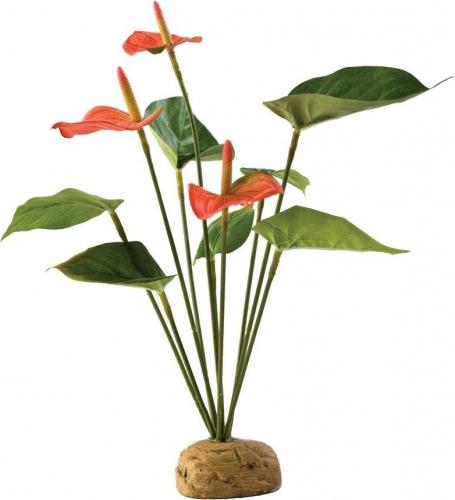 Anthurium Exo-Terra pour terrarium