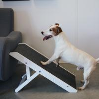 Barrieren und Treppen für Hunde