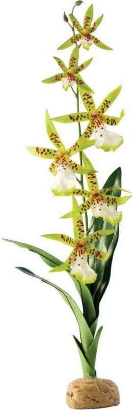 Orchidée pour terrarium Exo-Terra