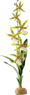 Orquídea Exo Terra