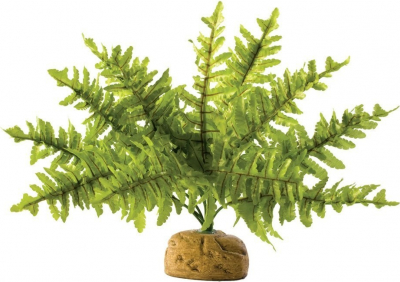 Exo Terra Boston Fern - Small