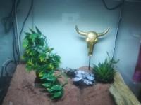 532_Plante-Amapallo-Exo-Terra-pour-terrarium_de_Faviola-Crystal_19815797735dd6784783b504.83495650