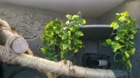 532_Plante-Ampallo-Exo-Terra_de_Eddy_158399625858ec802a4fd093.00583038