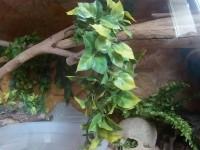 532_Plante-Ampallo-Exo-Terra_de_Guillaume_194035695258664417f0b4b4.30631791