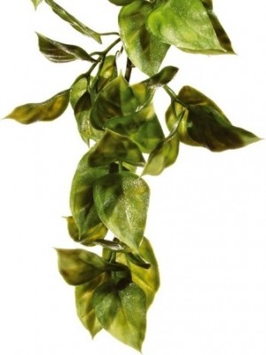 Exo Terra - Pflanze Ampallo