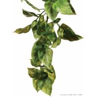 Plante Amapallo Exo-Terra pour terrarium