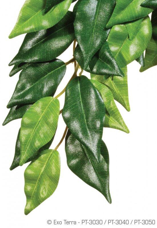 Plante ficus Exo Terra_0