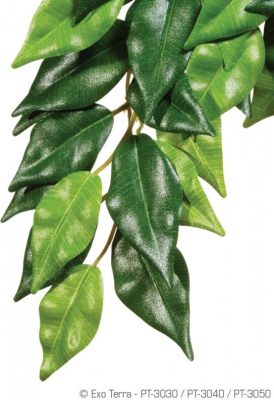 Exo Terra Hanging Rainforest Plant - Ficus