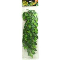 Ficus Pflanze - Exo Terra