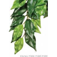 Plante ficus Exo-Terra pour terrarium