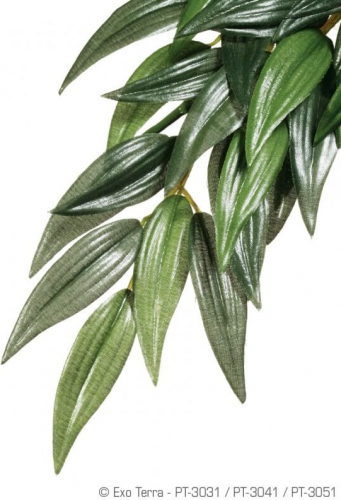 Plante ruscus Exo-Terra pour terrarium