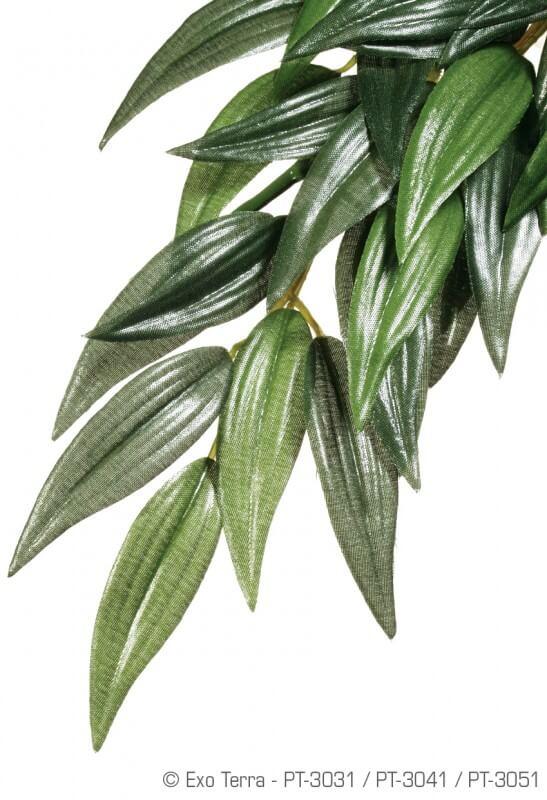 Plante ruscus Exo Terra_0