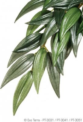 Plante ruscus Exo Terra